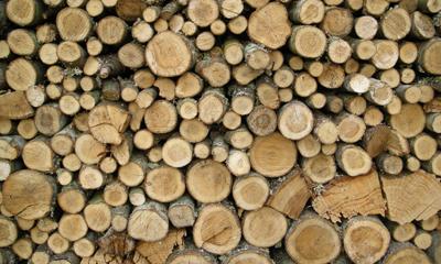 Odun Çeşitleri